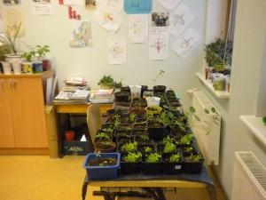 Esimene klass muutus tõeliseks taimelavaks